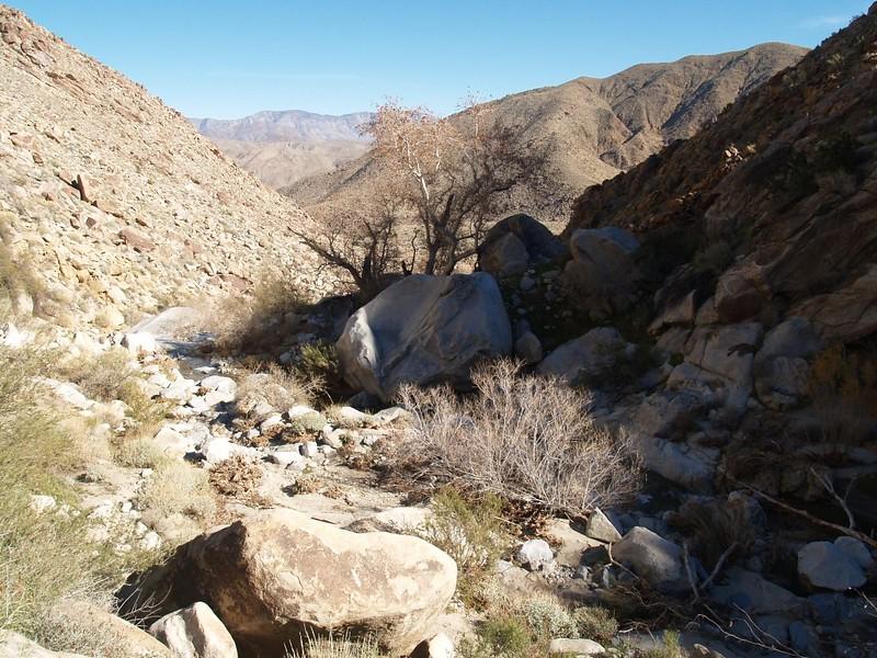 Looking back down Cougar Canyon