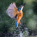 Kingfisher by peterspencer49
