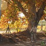 Biking and Wining - Mendoza, Argentina