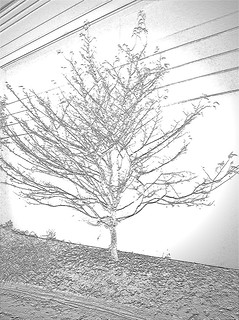 White Tree Emersion #1