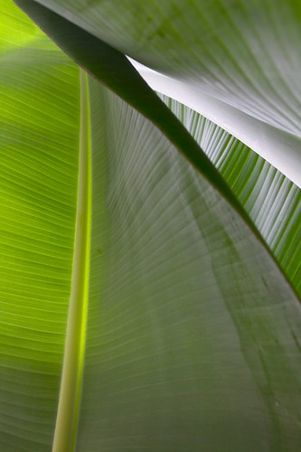 Foliage - Lake Atitlan, Guatemala -Photographer Ashli Akins