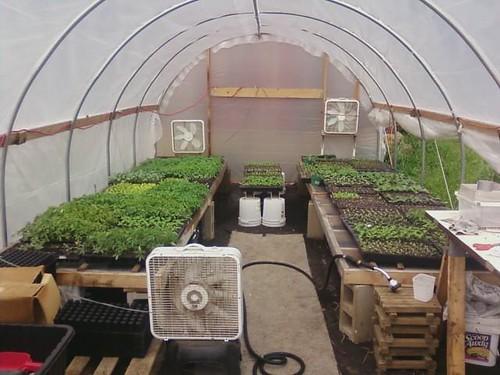Seedlings Spring 2010.002