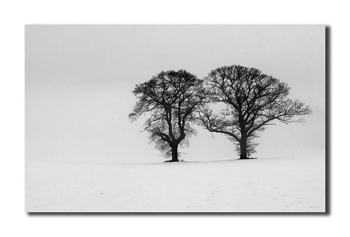 Two Naked Trees - Scottish Winter Scene