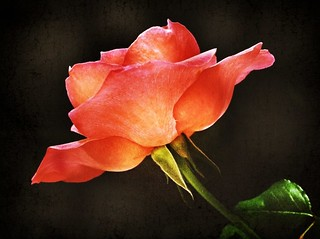 To all Women in the World ~ 8Mar2011~Para todas a Mulheres do Mundo  :)