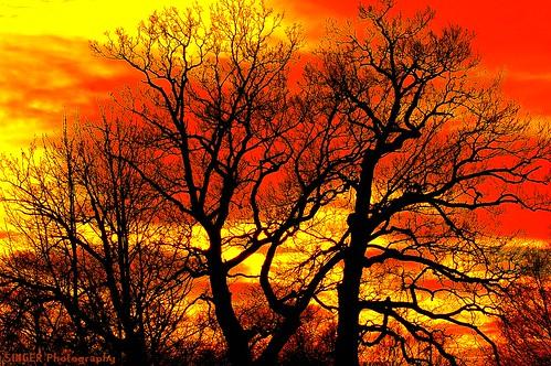 ngc theperfectphotographer naturescreations mindigtopponalwaysontop