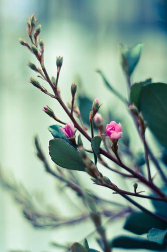 Spring beckons (26/365)