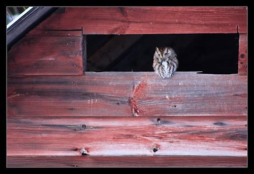 bird nature flickr vermont outdoor vt northhero borderfx