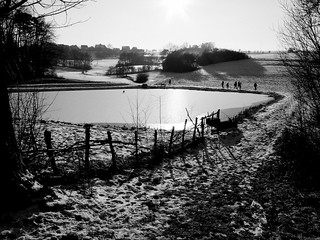 Winter Sun On Pond