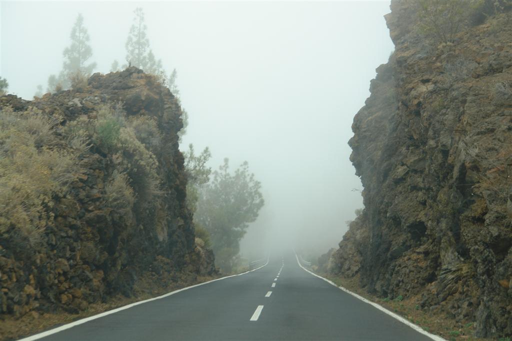 Qué hacer en Tenerife : Tenerife qué hacer en tenerife - 5434512794 7fc6415c65 b - Qué hacer en Tenerife para tener unas vacaciones completas