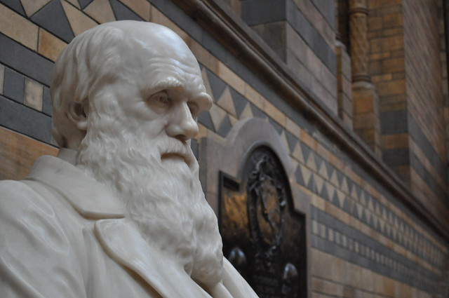 Components Of Darwin S Theory Of Natural Selection