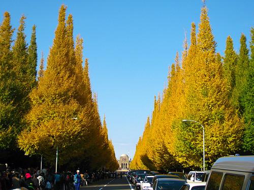 明治神宮外苑の銀杏並木 (Ginkgo Trees at Meijijingu Gaien)