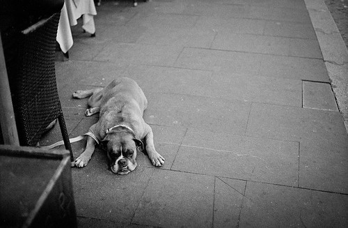 "Image titled ""Sad Dog, Rome."""