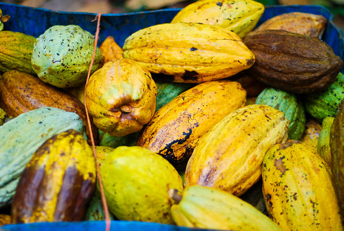 Costa Rica. On the Chocolate Tour