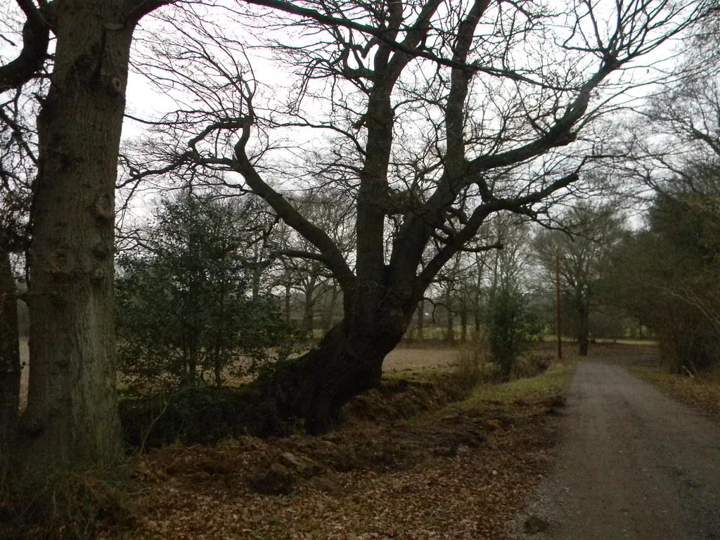 Sprawling Tree Dorking to Reigate
