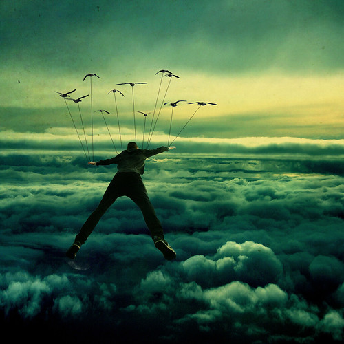 Fly away (from) home. by Kera Robson