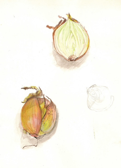 Onion sketch - from a looong time ago Green Onion Sketch