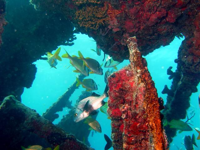 wreck diving florida