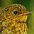 the European Birds and Wildlife group icon