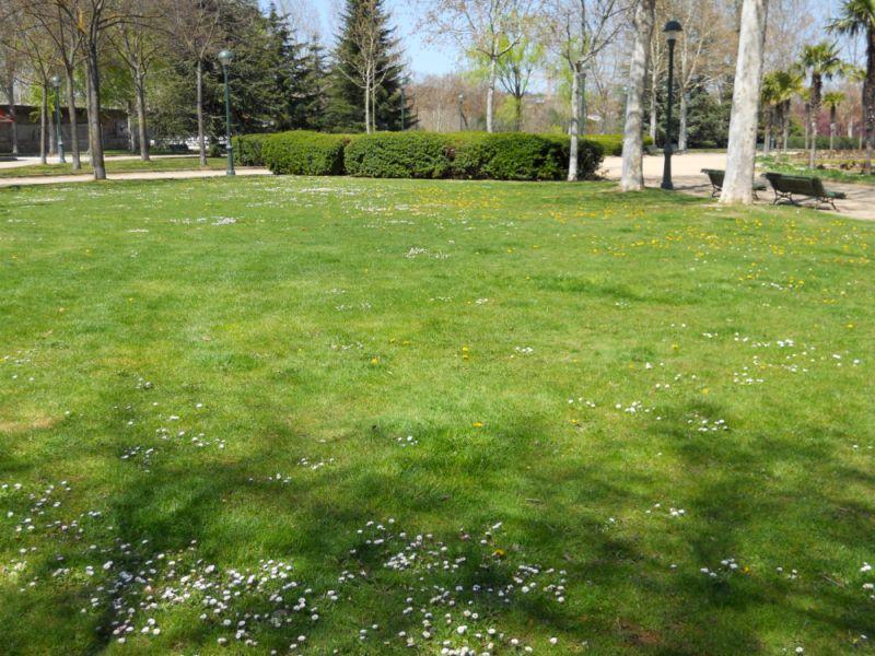 Jardineros en acci n mantenimiento del c sped - Cesped para jardin ...