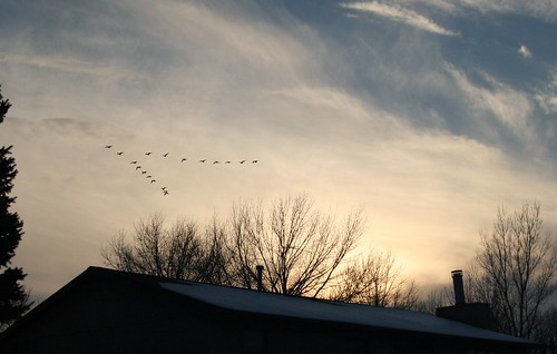sunset birds geese flight iowa