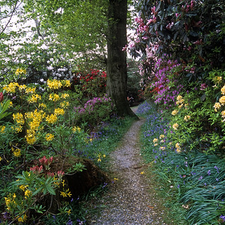 Leonardslee Gardens, West Sussex, UK | Tranquil walks through woodlands filled with flowering azaleas, bluebells and rhododendrons (6 of 23)