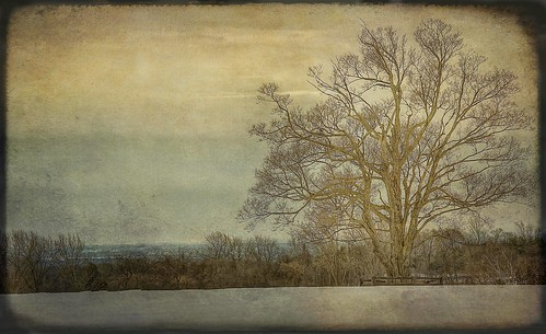 winter snow ontario canada tree texture nature landscape nikon grunge nikkor f28 hdr caledon 70200mmf28 7020mm d700