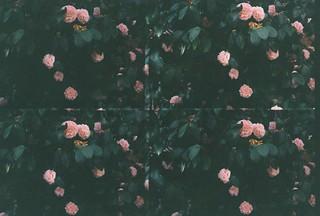 Blossom mind.