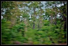 Tiwi Blur