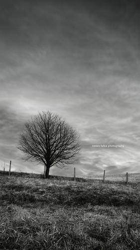 sky bw tree nature clouds landscape ir blackwhite pentax dramatic highcontrast infrared 1855 twop da1855 justpentax pentaxk100dsuper smcpentaxda1855mmf3556 k100ds ir720 pentaxart tianyair720nmfilter