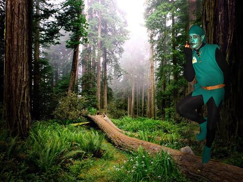 Bosques magicos irlanda - Imagui