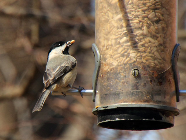 Brookside Nature Center Silver Spring Md