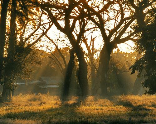 trees sunrise gb rays pk zuiko sweetcaroline tarlac 1442mm e520