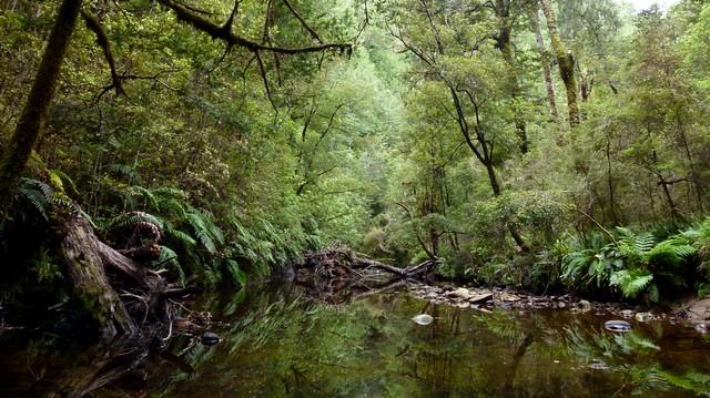 McLeans Creek, Paparoa Range, West Coast