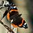 the [][][]Le  Farfalle... fiori volanti[][][] /  only butterflies group icon
