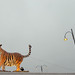 tiger by Camilla Engman