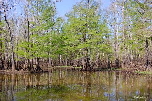 texas swamp orangecounty southeasttexas texasborder sabineriver blueelbowswamp louisianaborder texasswamp tonyhouseman texaswma texaswildlifemanagementarea