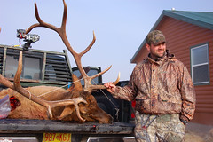 hunting, deer, trophy hunting, elk,