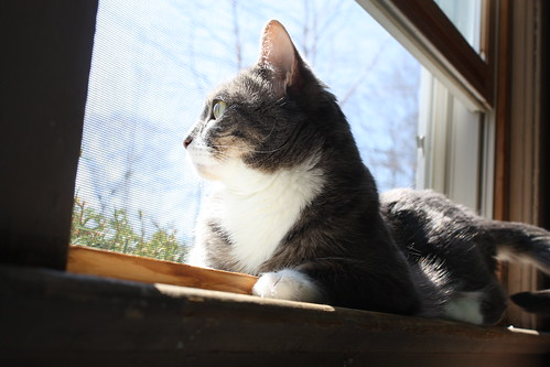 Window Cat