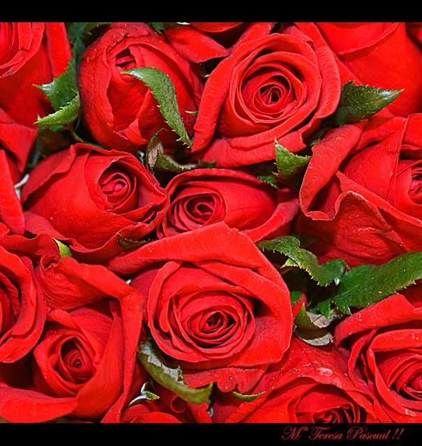Rosas Para Ti