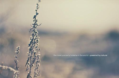 sunset sun plant painterly flower sunrise canon germany bayern deutschland bavaria spring sonnenuntergang dof bokeh pflanze 50mm14 depthoffield usm blume sonne sonnenaufgang frühling schärfentiefe ingolstadt firstsun tiefenschärfe unschärfe malerisch eos550d