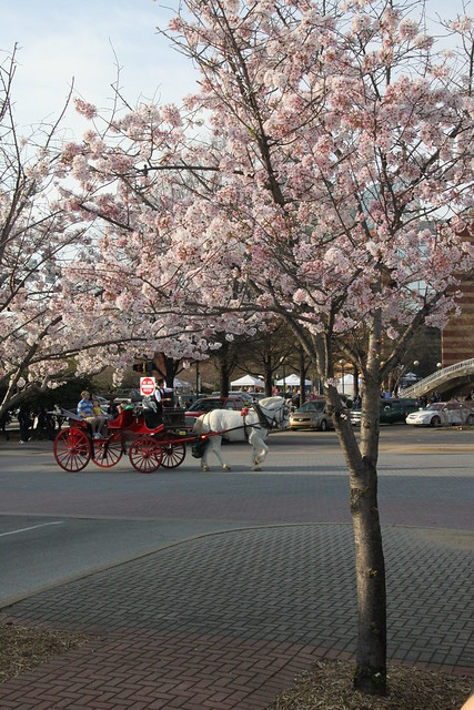 chattanooga cherry tree with carriage