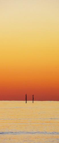 ocean sunset beach grass flordia