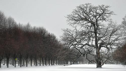 snow chicago blizzard 2011 snowpocalypse snownami snowmageddon snomg snotoriousbig