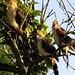 Família pássaros vistas do alto do Farol de Santa Marta/SC - Foto: Rê Sarmento