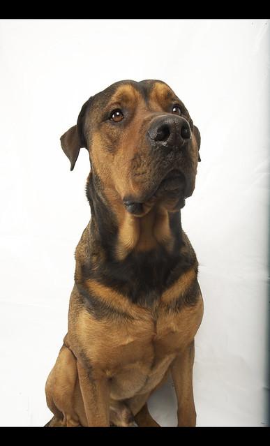 Header of dogman
