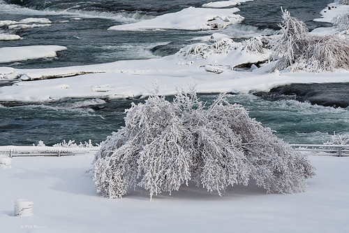ice covered tree - Niagara Falls
