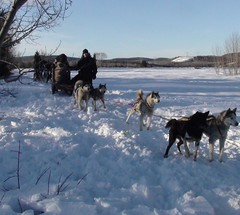 pet(0.0), animal(1.0), dog(1.0), winter(1.0), vehicle(1.0), snow(1.0), mammal(1.0), mushing(1.0), greenland dog(1.0), dog sled(1.0), sled dog racing(1.0), sled dog(1.0),
