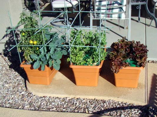 Free Download Program Garden Patch Growbox Filesbot