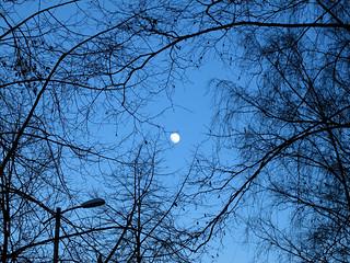 (76/365) Gibbous moon