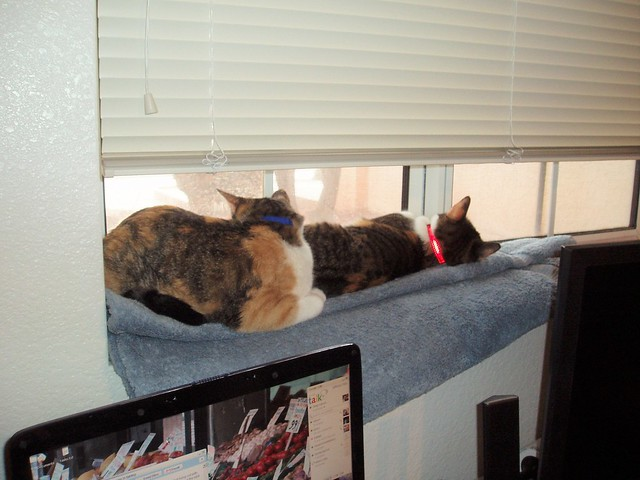 How much are those kitty poos in the window? (meow meow) | shirley shirley bo birley Blog